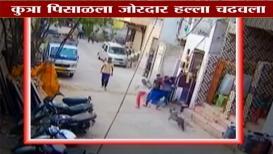 VIRAL FACT : पिसाळलेला कुत्र्याने मुंबईकरांचे तोडले लचके? हे आहे सत्य
