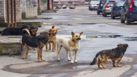 मोठ्या हॉटेल्समध्ये मटण म्हणून दिलं जातं कुत्र्यांच मांस, FIR दाखल