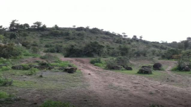 पुण्यातील सणसवाडीच्या डोंगरावर पत्नीची हत्या करून पतीने केली आत्महत्या